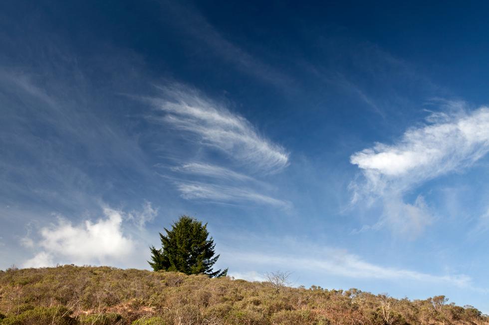 paysage colline arbre et ciel