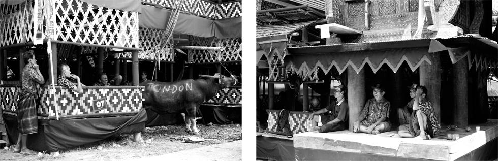 Rites funéraires en pays Toraja, Sulawesi : .