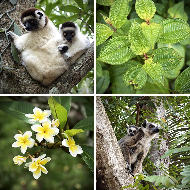 Quadriptyque autour de Madagascar #03 : .