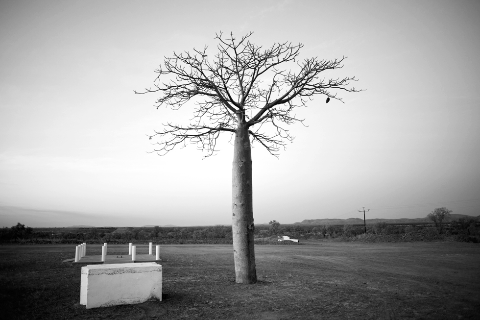 Baobab à Kununurra, Western Australia : .