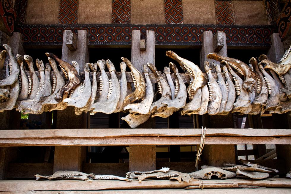 cranes de buffalo maison traditionnel rites funéraires pays toraja sulawesi indonésie