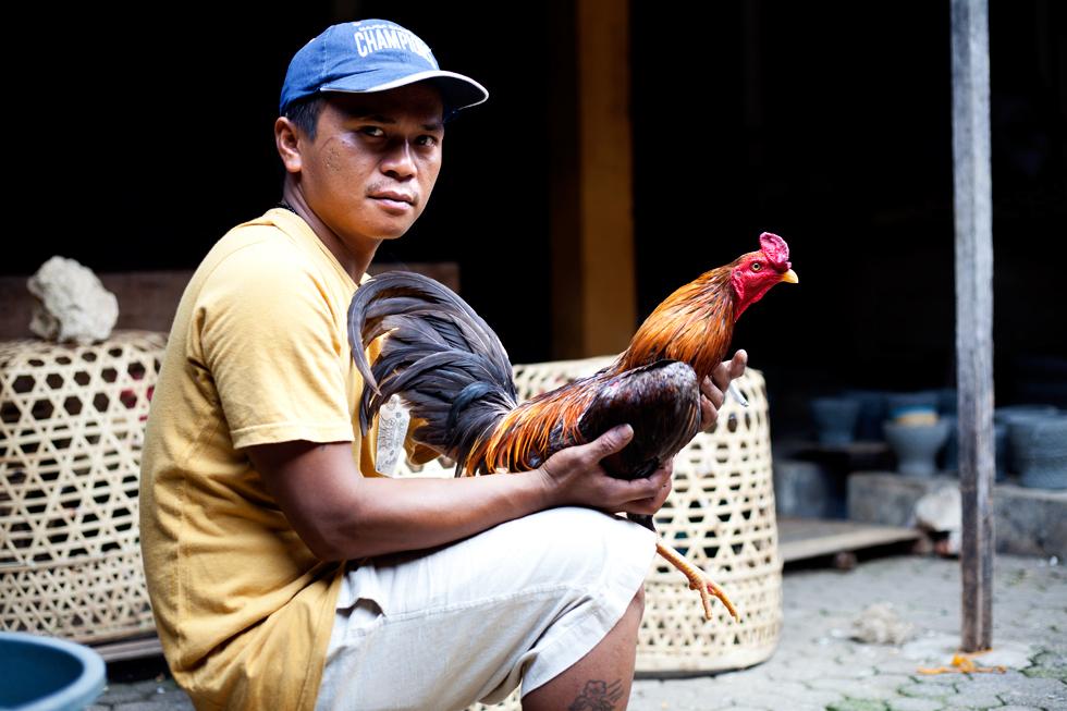 Marché aux animaux, Rantepao Tana Toraja, Sulawesi en Indonésie : .
