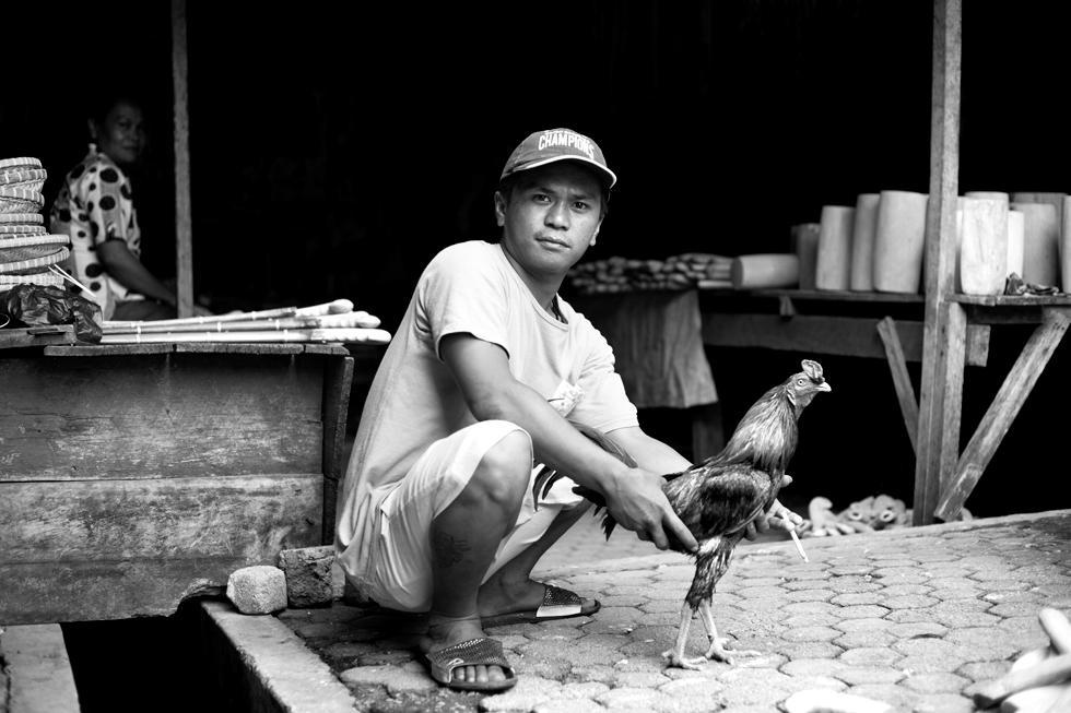 Combat de coq, Rantepao market, Sulawesi Indonésie : .