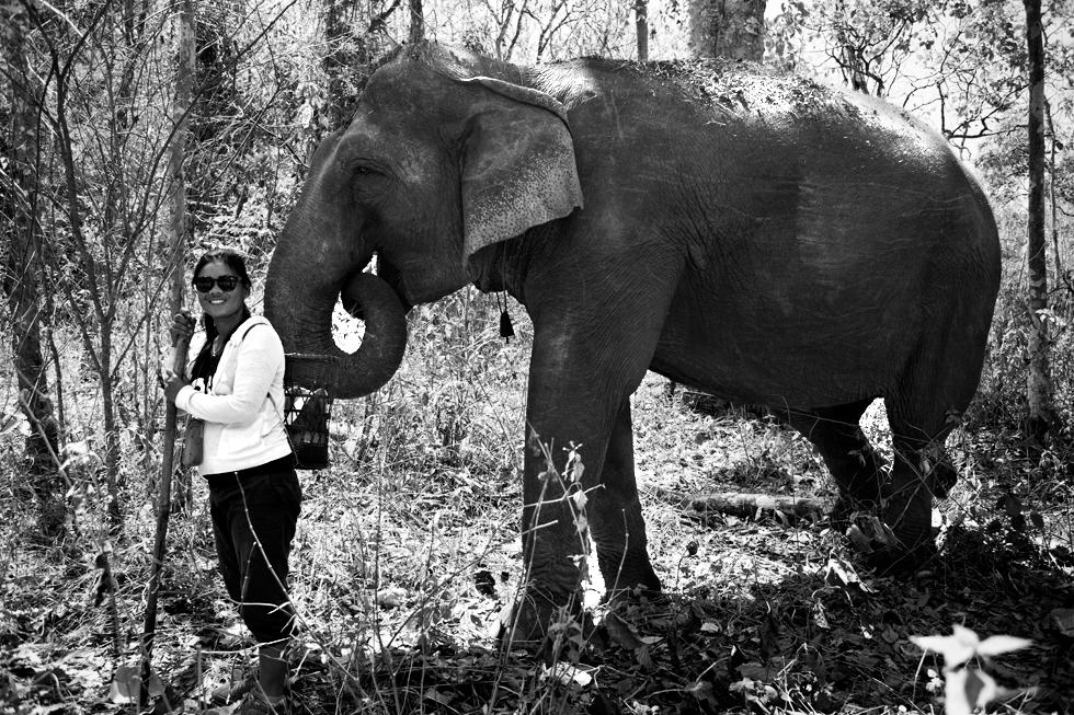 Éléphant à Mondulkiri, Cambodge : .