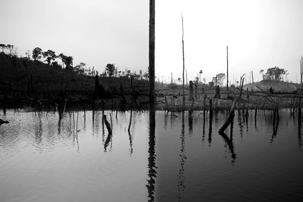 Forêt engloutie sur la boucle de Thakhek, Laos : .