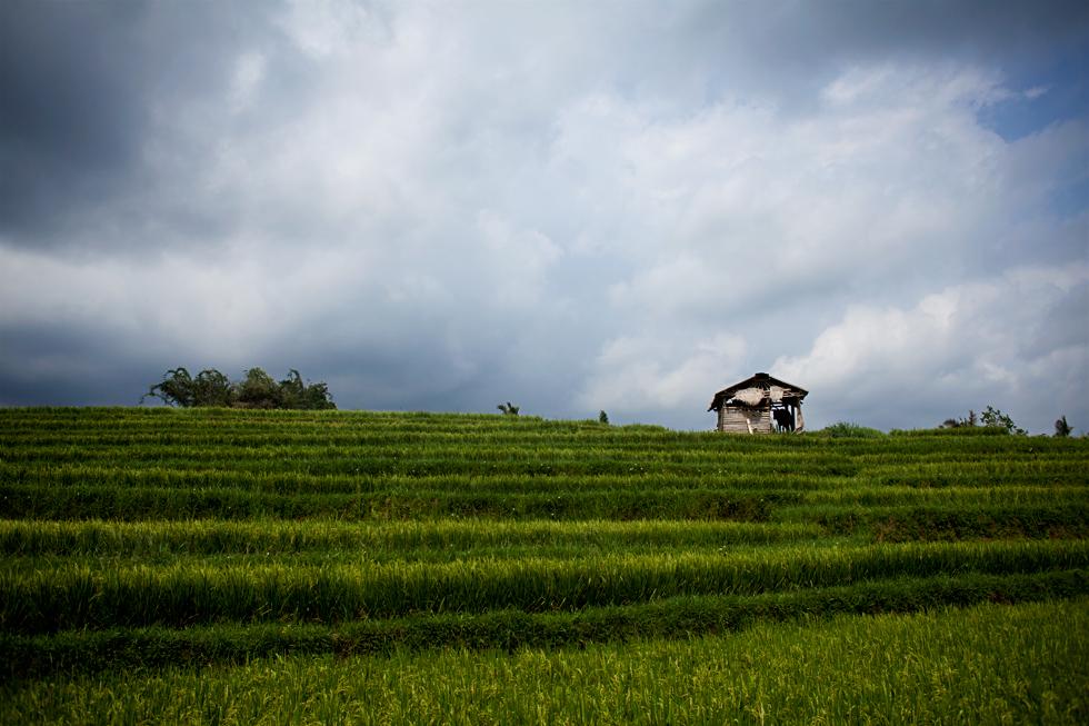 Rizières en terrasses à Jatiluwih, Bali Indonésie : .