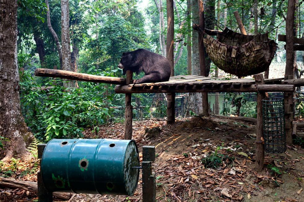 Ours brun d'Asie dans une réserve près de Luang Prabang au Laos : .