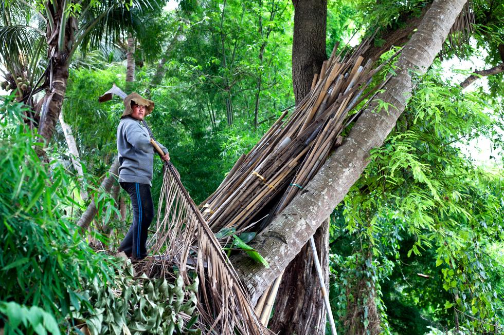 femme coupant des branches luang prabang laos