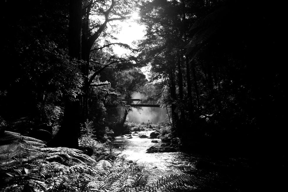 Whangarei Falls, Nouvelle Zélande : .