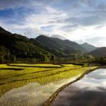rizières et montagne au laos