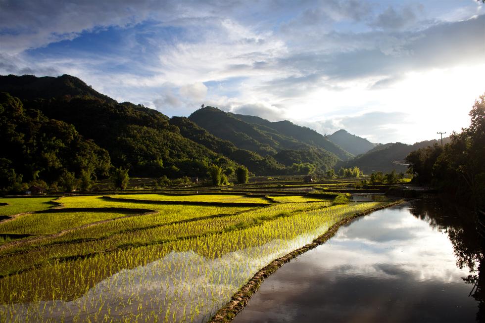 Rizières Province de Houaphan au Laos : .