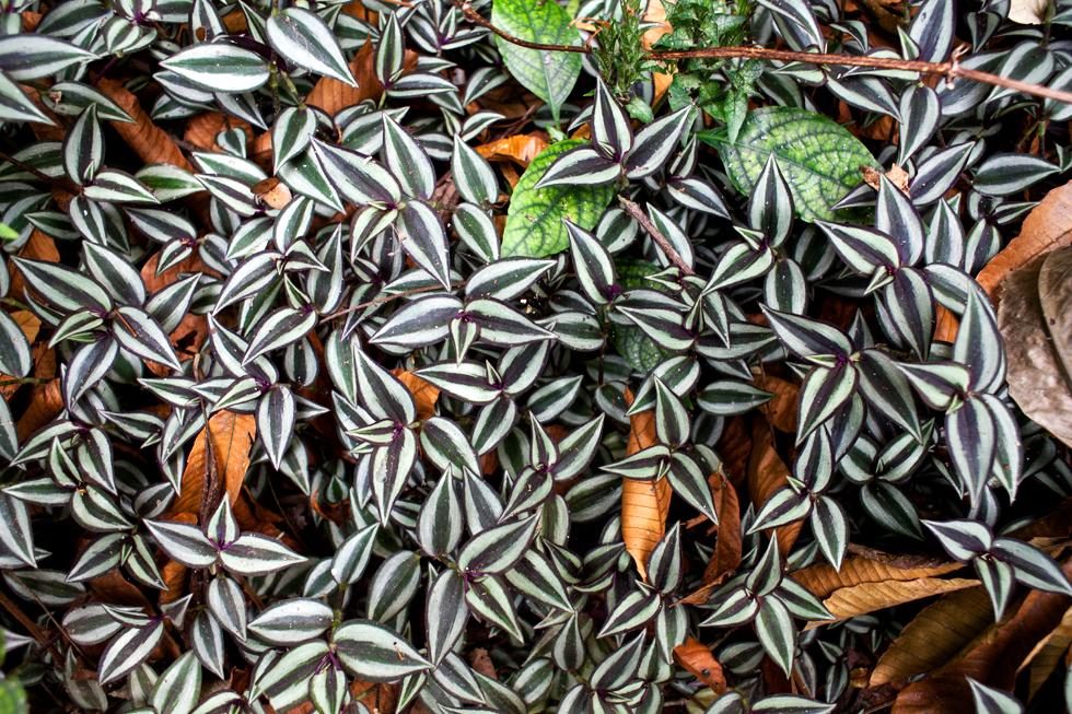 Tapis de feuilles à Kuang Si Fall, Laos : .